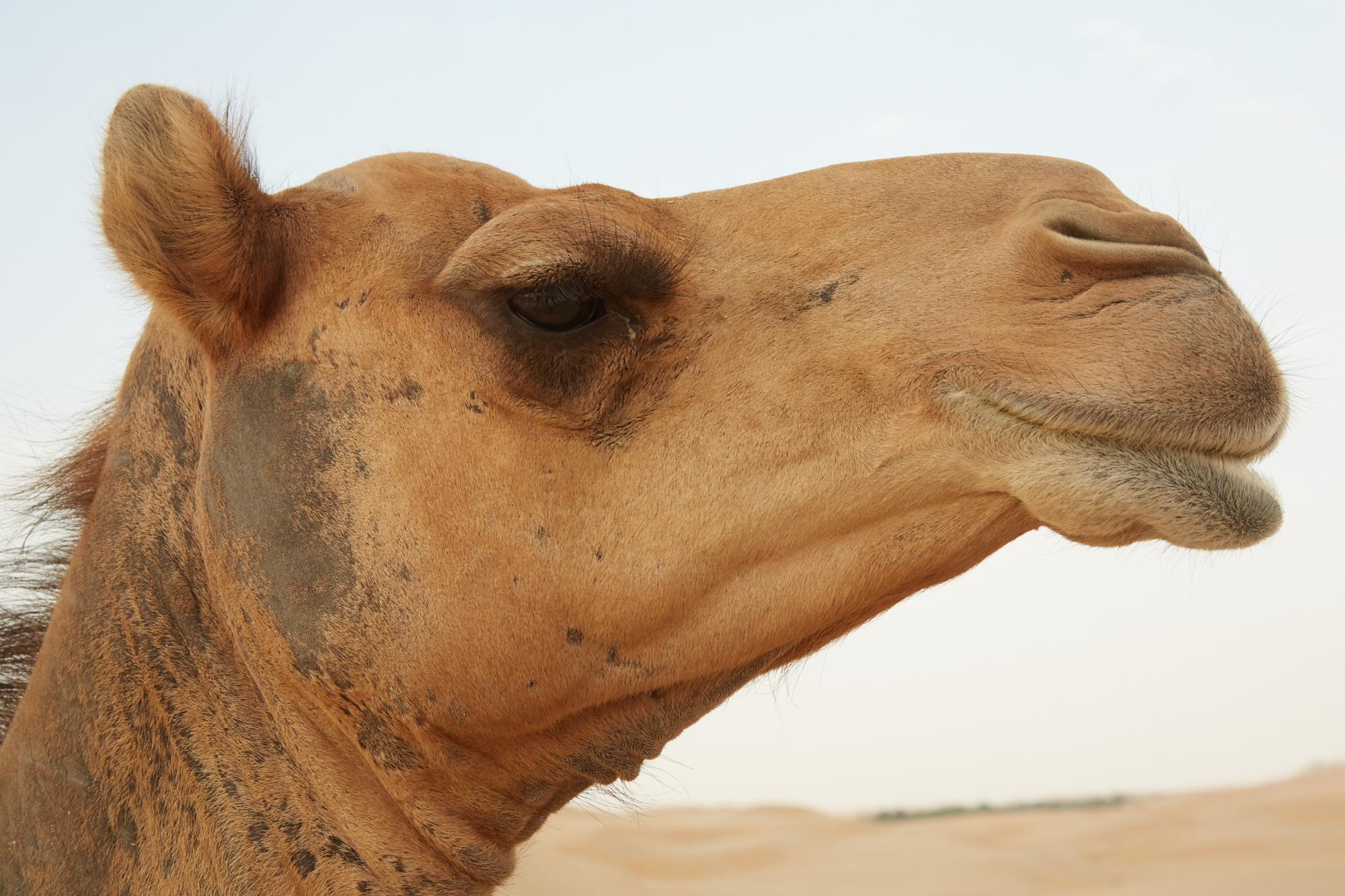 Wer hat an der Uhr gedreht? Eher geht scheinbar ein Kamel durch ein Nadelöhr, als dass die Zeitumstellung abgeschafft wird.