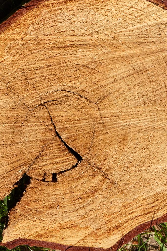 Amazonas-Regenwaldbrände: Den Klimawandel-Alarmisten ist jedes Mittel recht um Angst und Schrecken zu verbreiten